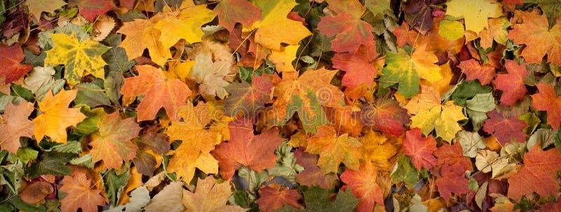 Herbstbild mit verschiedenen gefallenen Blättern stockbild