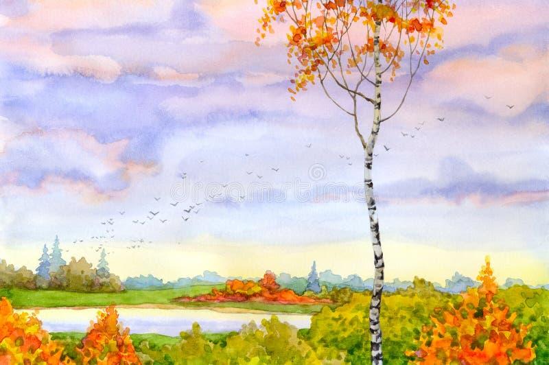 Herbstbirke stock abbildung