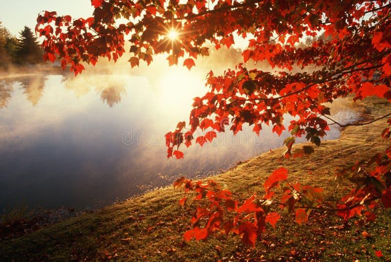Herbstblätter über nebelhaftem Teich, CT stockfoto