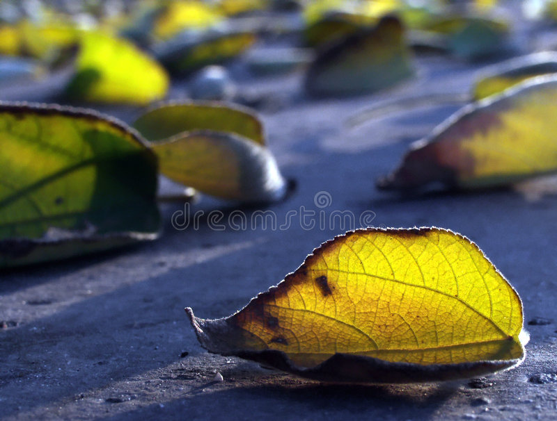 Download Herbstblätter stockfoto. Bild von schatten, leuchte, stimmung - 25726