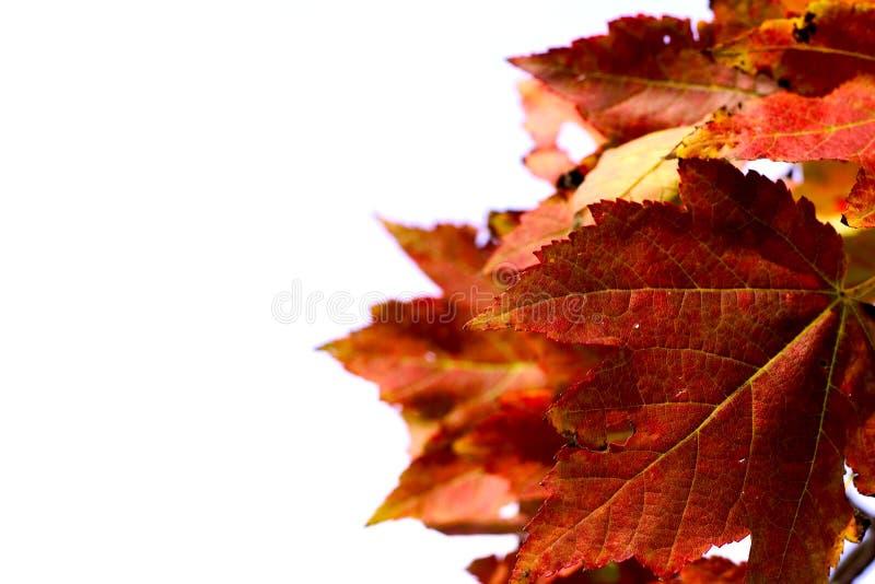 Download Herbstblätter stockfoto. Bild von baum, herbst, betriebe - 28384