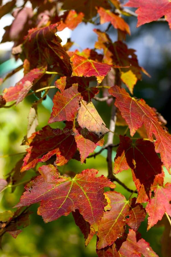 Download Herbstblätter stockfoto. Bild von saisonal, nave, jahreszeit - 28452