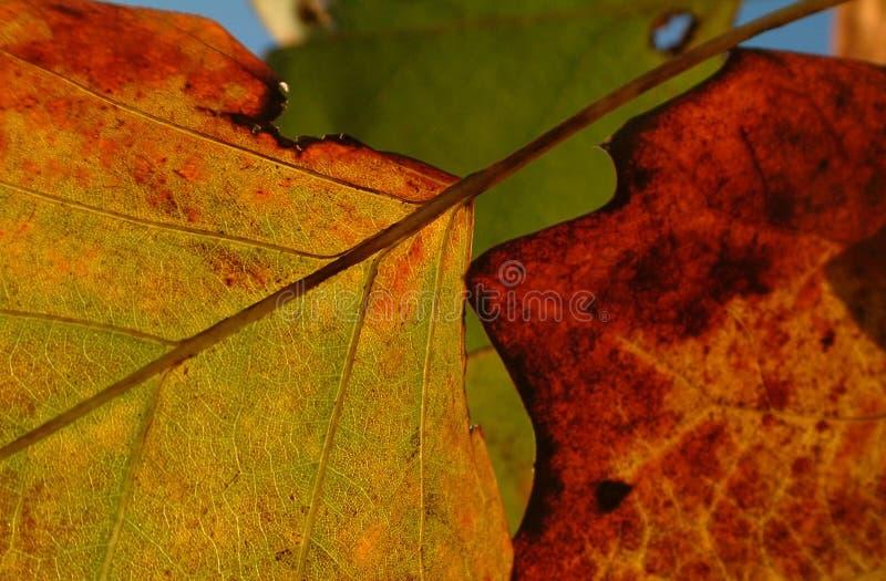 Download Herbstblätter stockbild. Bild von sauber, grün, refresh - 30705