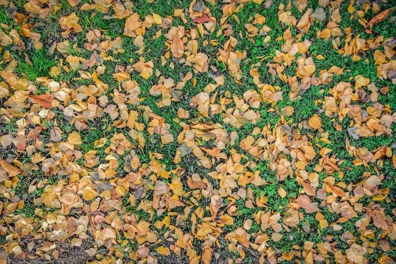 Herbstblätter auf dem Gras lizenzfreie stockfotos
