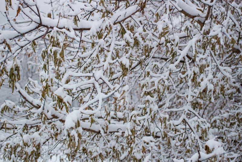 Herbstblätter auf dem Schnee kalt stockfotografie