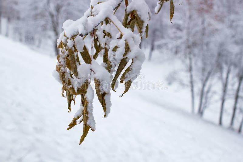 Herbstblätter auf dem Schnee kalt lizenzfreies stockbild