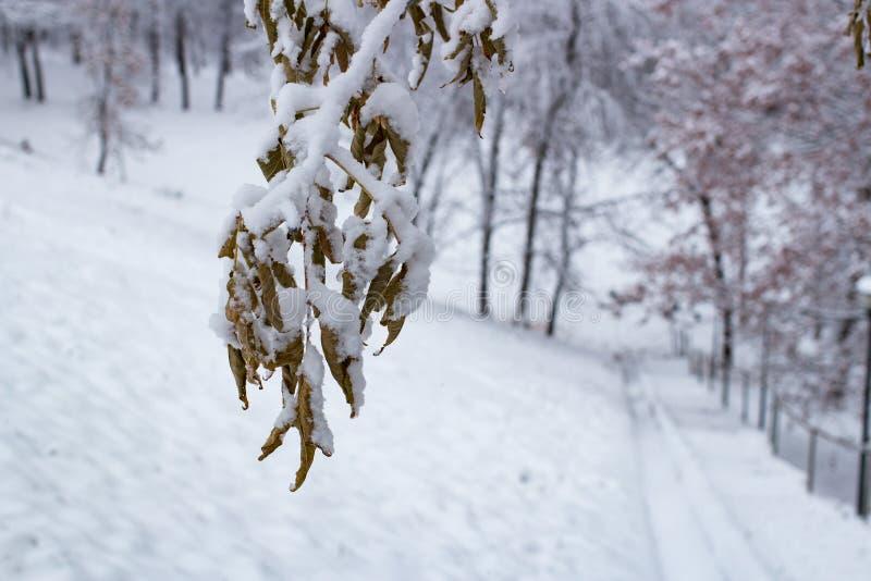 Herbstblätter auf dem Schnee kalt stockbild