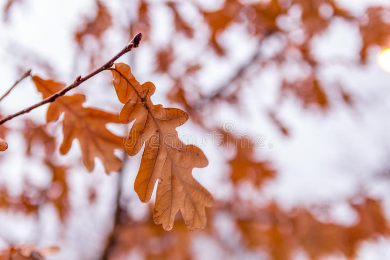 Herbstblätter auf einer Niederlassung stockfotos