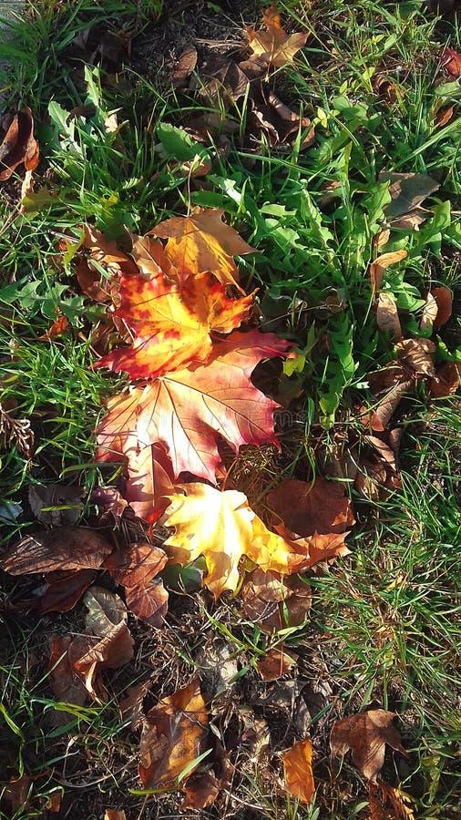 Herbstblätter auf grünem Gras Die Farben des Herbstes Die Schönheit der Natur in Polen lizenzfreie stockfotografie