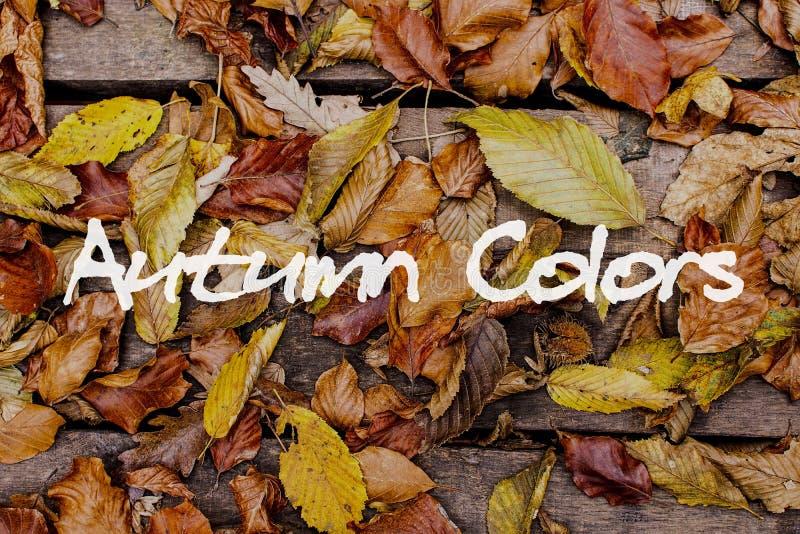 Herbstblätter auf hölzernem Hintergrund Autumn Colors Concept Wallpaper lizenzfreie stockfotografie
