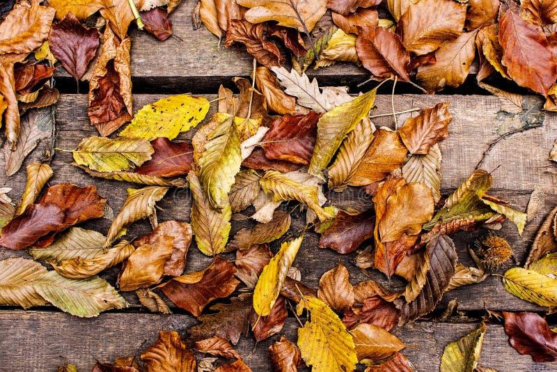 Herbstblätter auf hölzernem Hintergrund Autumn Concept Wallpaper lizenzfreie stockfotografie