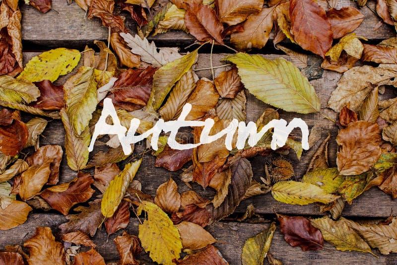 Herbstblätter auf hölzernem Hintergrund Autumn Concept Wallpaper stockfoto