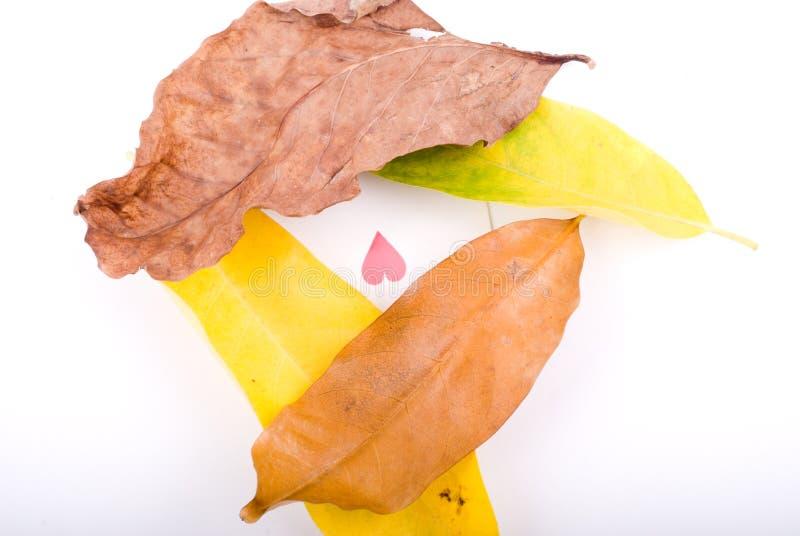Herbstblätter auf Weiß mit Innerem stockfotos