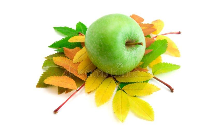 Herbstblätter des Ebereschebaums stockbild