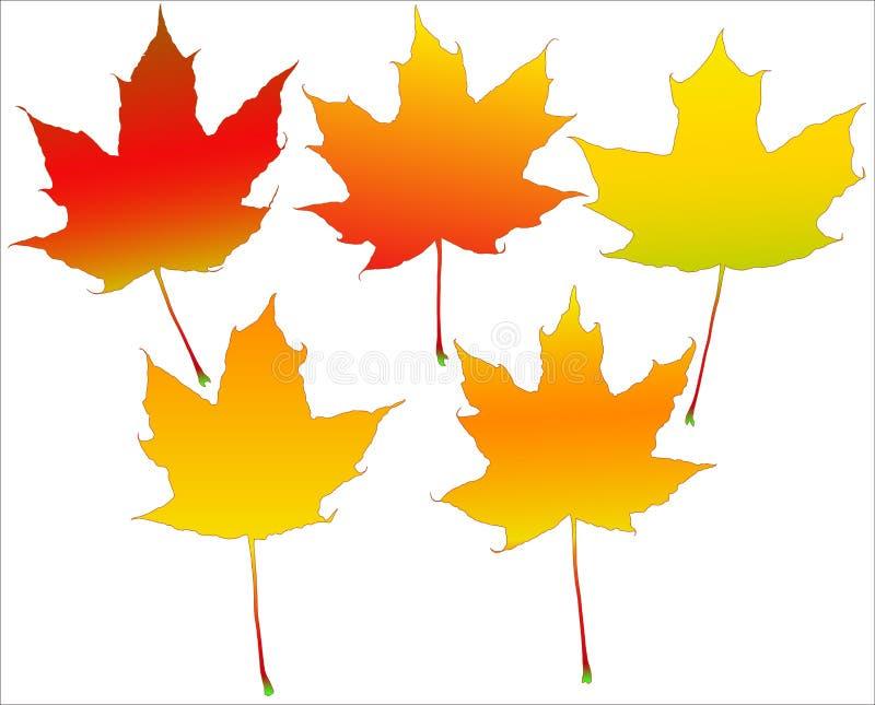 Herbstblätter eingestellt lizenzfreie abbildung