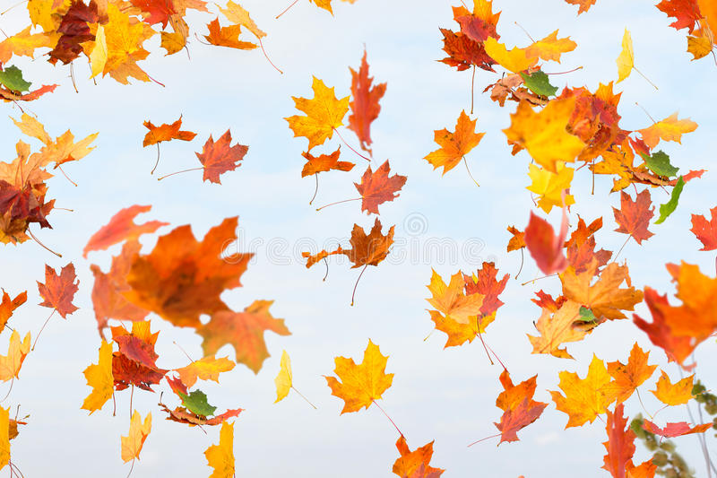 Herbstblätter fallen lizenzfreies stockfoto