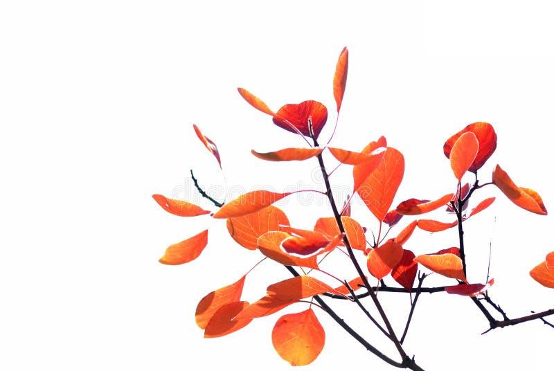 Herbstblätter, flacher Fokus lizenzfreies stockfoto
