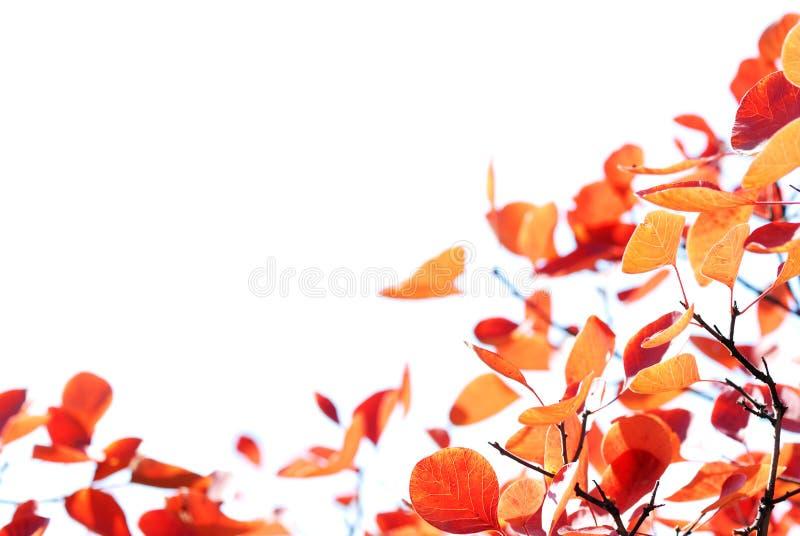 Herbstblätter, flacher Fokus lizenzfreies stockbild