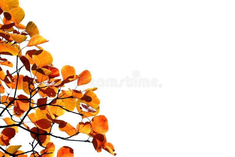 Herbstblätter, flacher Fokus stockbild