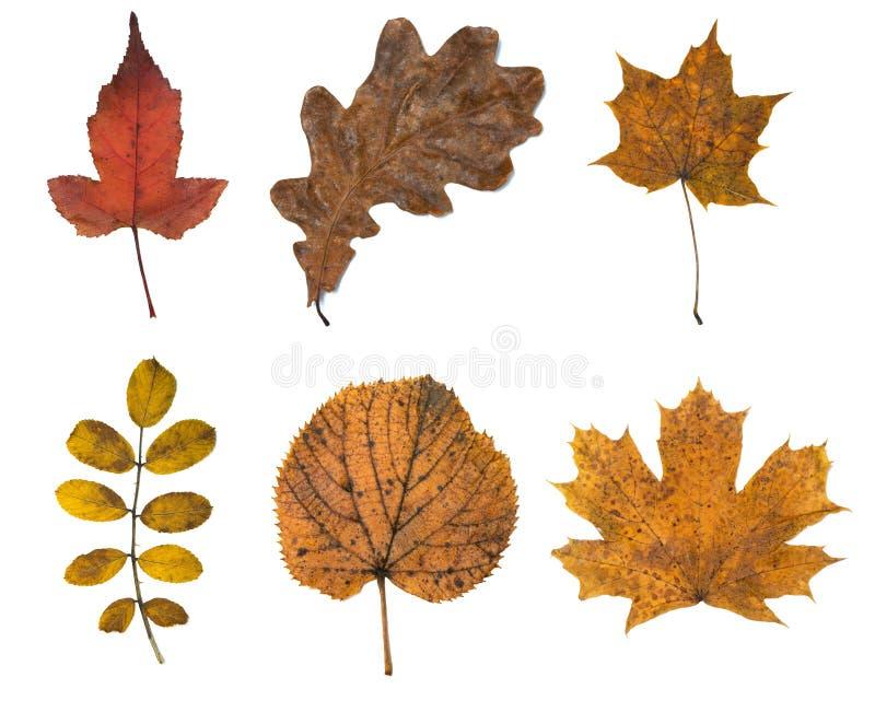 Herbstblätter getrennt worden lizenzfreies stockfoto