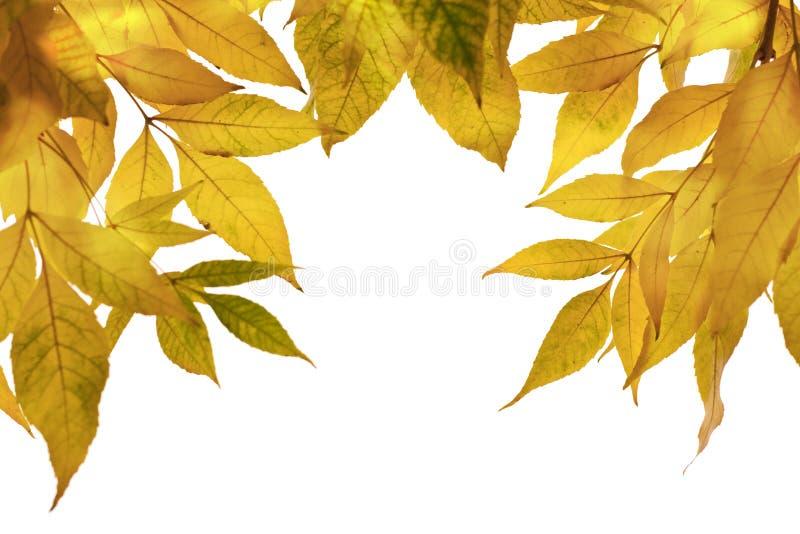 Herbstblätter. Horizontale Ansicht. lizenzfreies stockbild