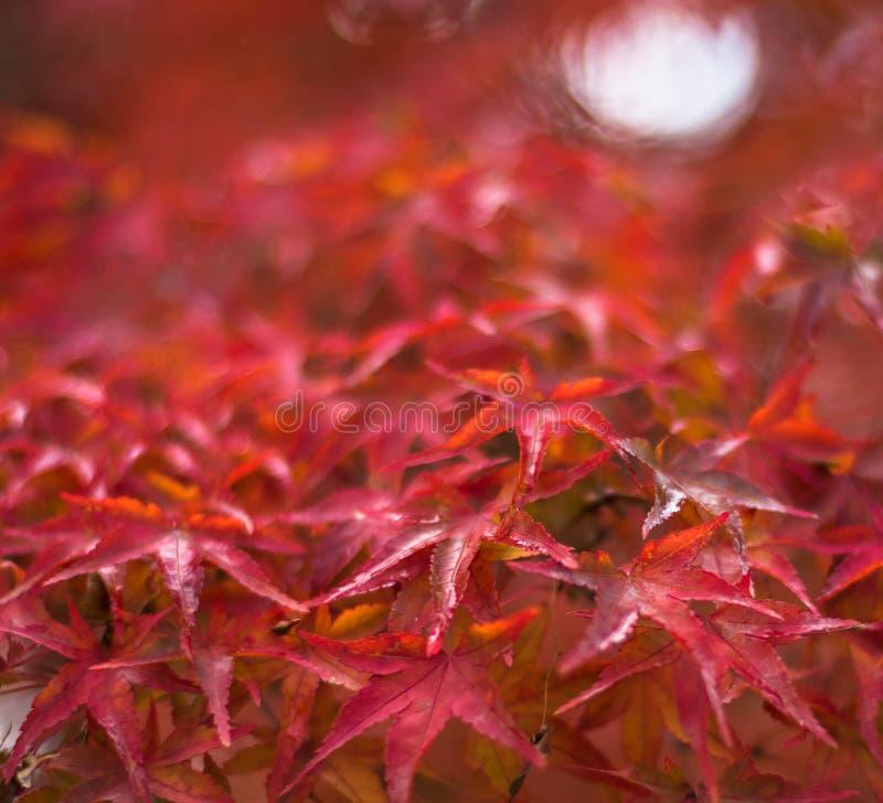 Herbstblätter, sehr flacher Fokus lizenzfreies stockbild