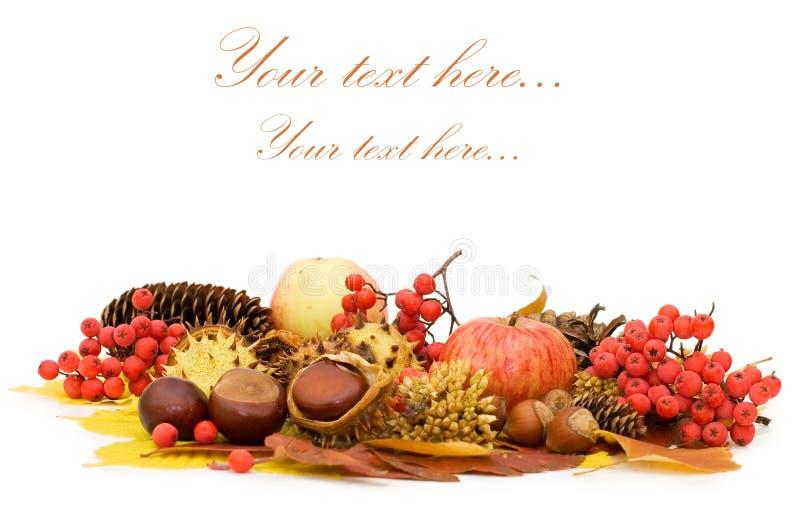 Herbstblätter und -früchte lizenzfreie stockfotografie