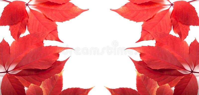 Herbstblathintergrund mit Exemplarplatz lizenzfreie stockfotos