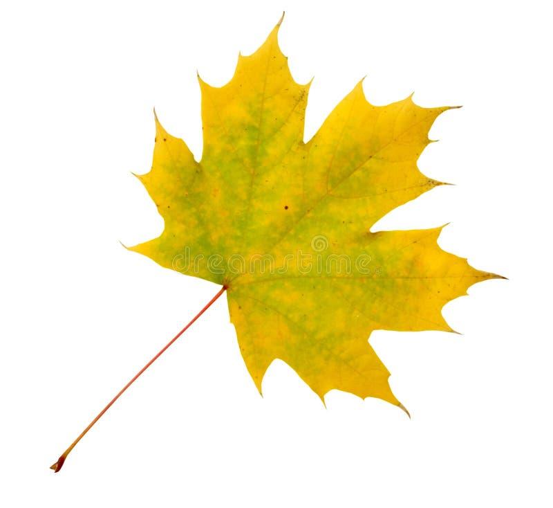 Herbstblatt stockbilder