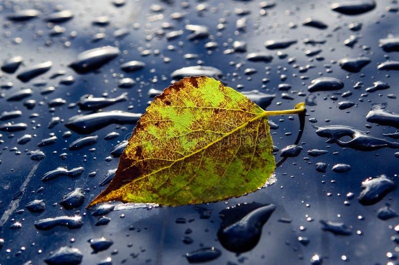 Herbstblatt stockbild