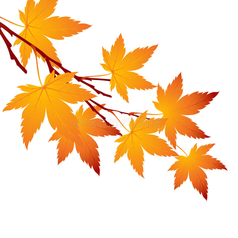 Herbstblatt-Ahornniederlassung Auch im corel abgehobenen Betrag stock abbildung