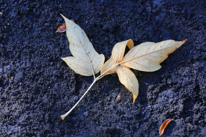 Herbstblatt auf dem Boden morgens stockbilder