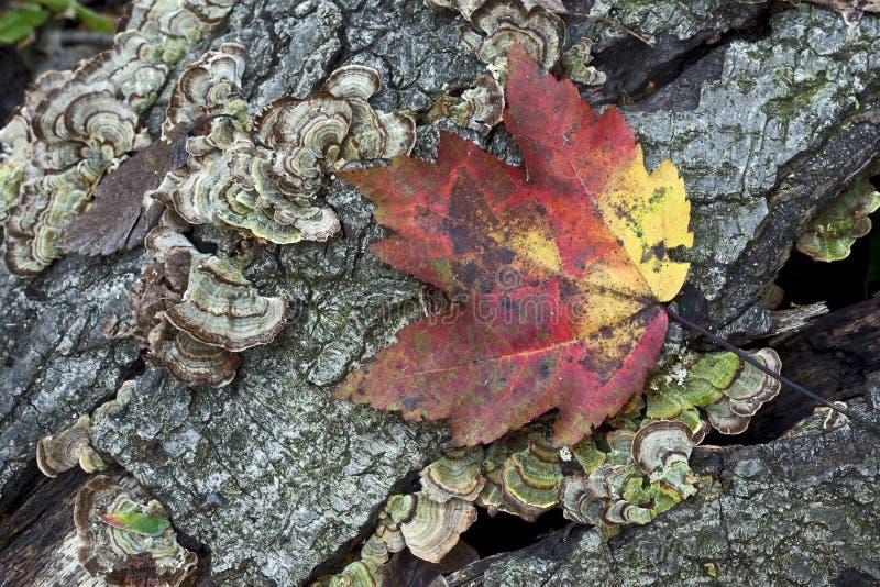 Herbstblatt auf Protokoll lizenzfreie stockbilder