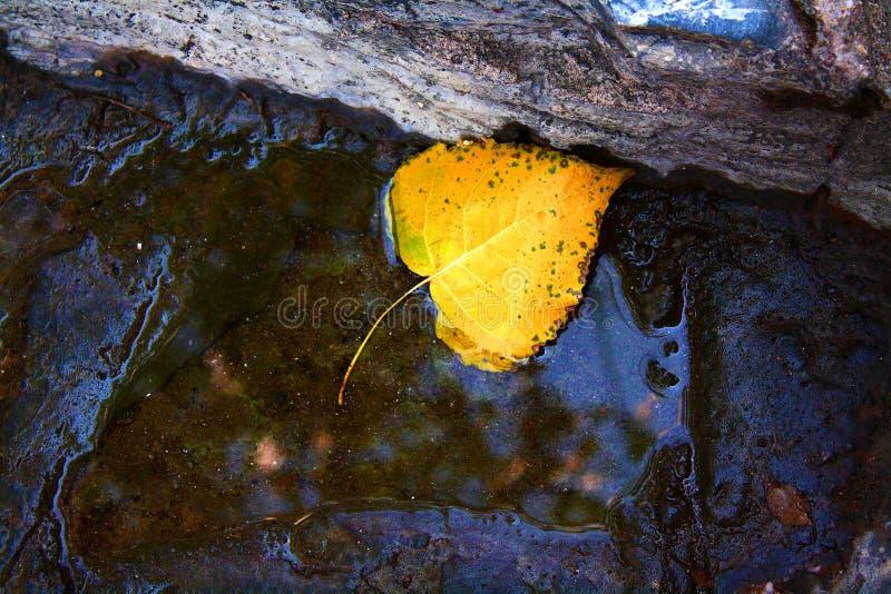 Herbstblatt gefallen lizenzfreies stockbild
