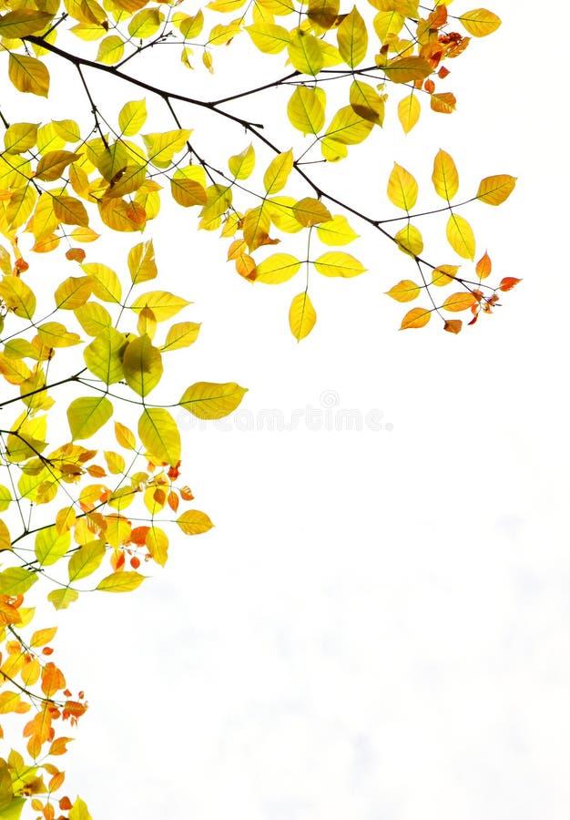 Herbstblatt-Hintergrundexemplarplatz stockfotografie