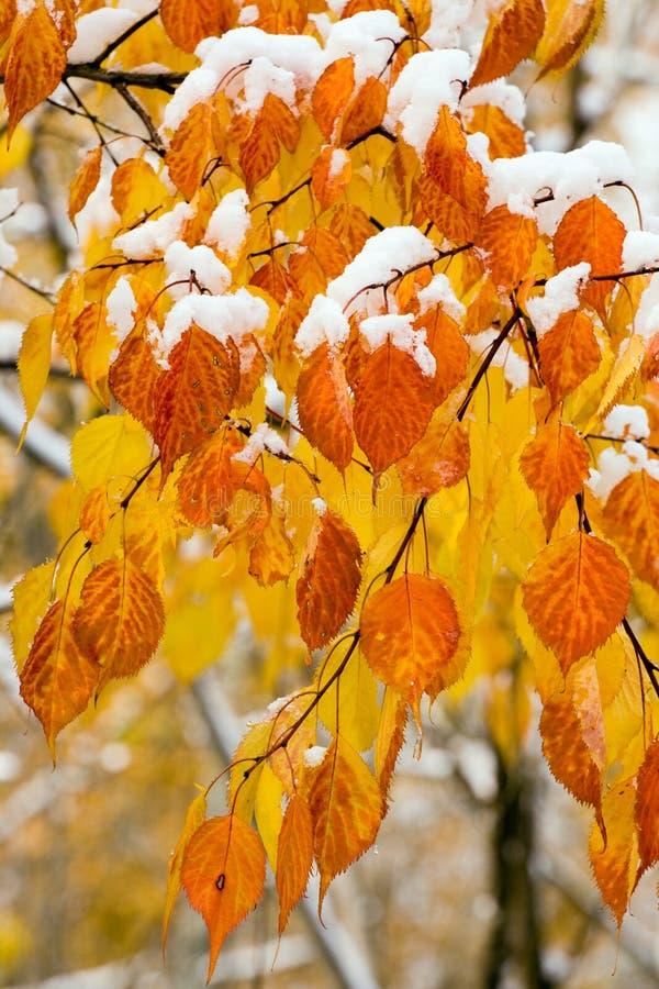 Herbstblatt im Schnee lizenzfreie stockfotografie