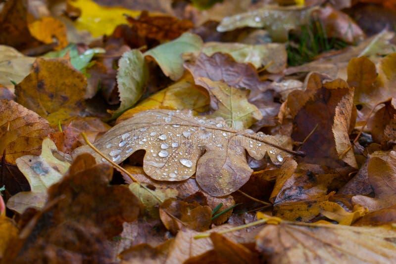 Herbstblatt morgens stockbilder