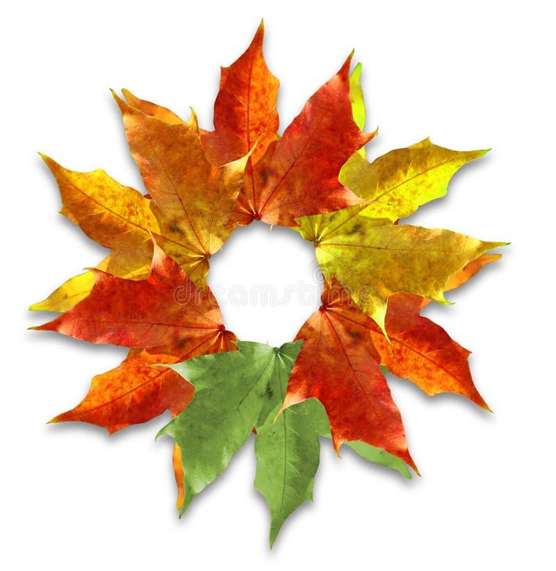 Herbstblattaufbau lizenzfreie stockfotografie