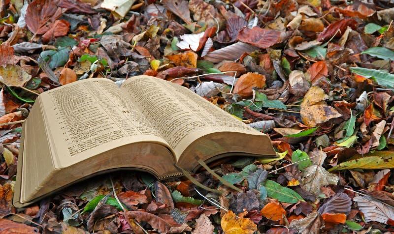 Herbstblattbibel lizenzfreie stockfotografie