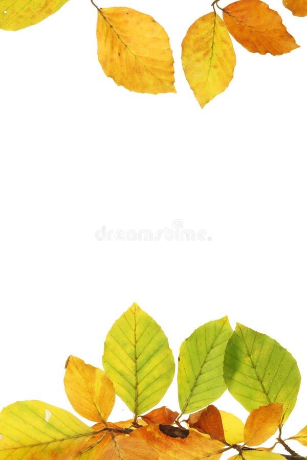 Herbstblattfeld stockbilder