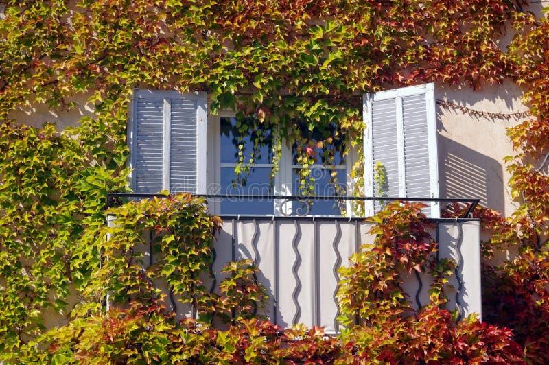 Herbstblattfenster Stockbild