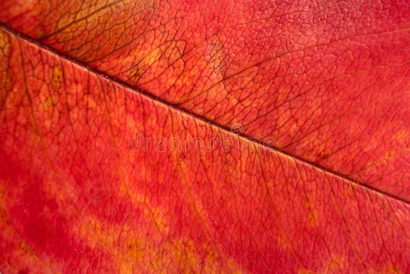 Herbstblattmakro stockfotografie