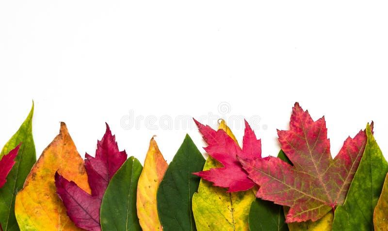 Herbstblattrand stockfotografie