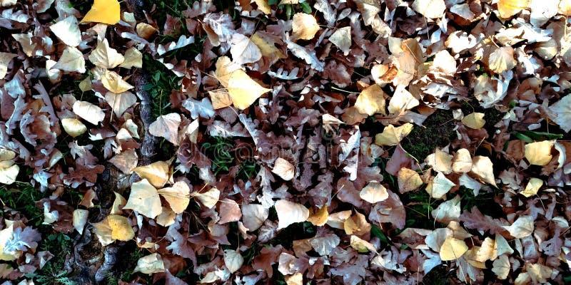 Herbstblattsänfte im Garten oder im Park, fallen Naturhintergrund im Freien mit bunten gefallenen Blättern lizenzfreie stockfotos
