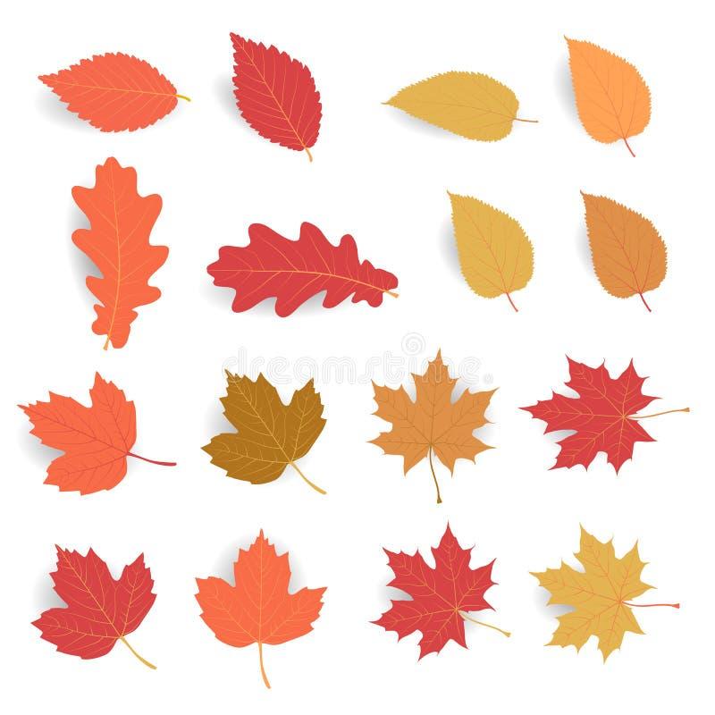 Herbstblattsatz Lassen Sie Fall in der flachen Farbe mit dem weichen Schatten, der auf weißem Hintergrund lokalisiert wird vektor abbildung