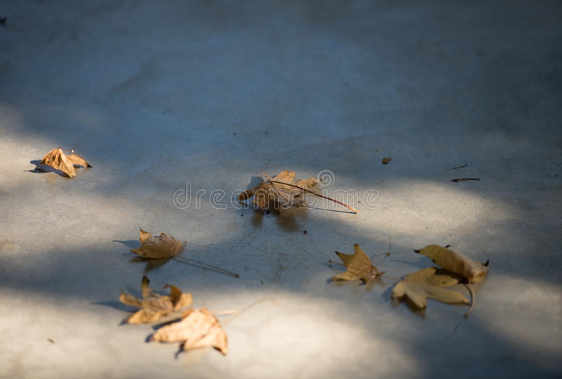 Herbstblau lizenzfreie stockfotografie