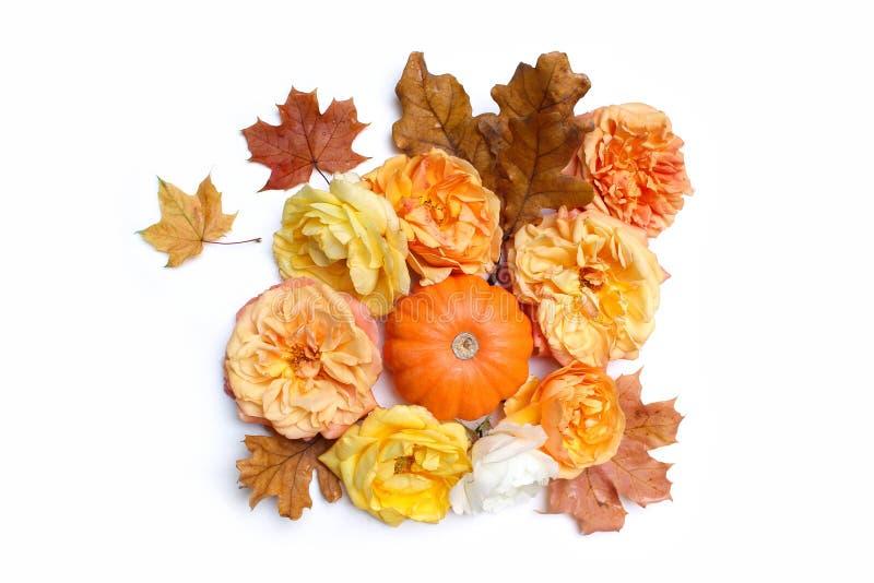 Herbstblumenzusammensetzung gemacht vom bunten Ahorn, von Eichenblättern, vom orange Kürbis und von den Verblassenrosen lokalisie stockbild