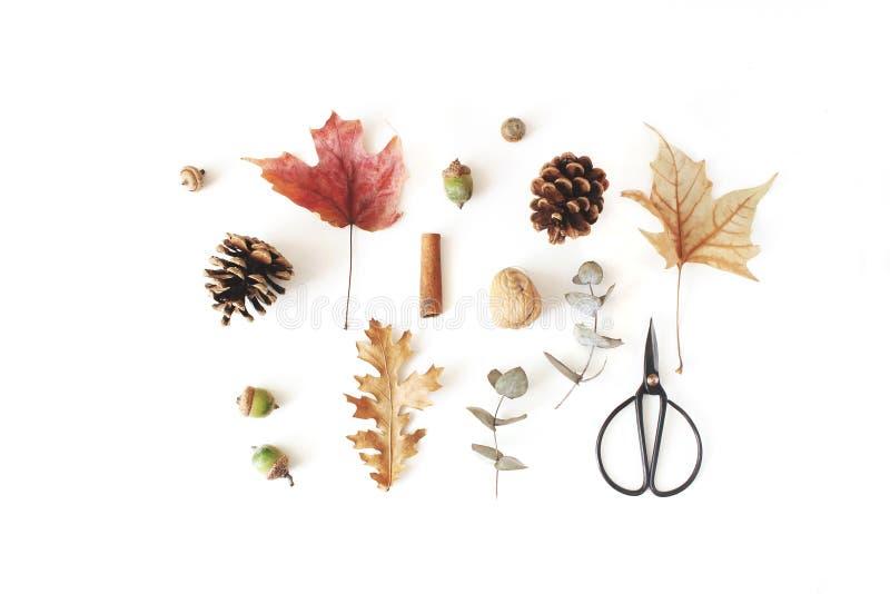 Herbstbotanische Blumenzusammensetzung Ahorn, Eiche und trockener Eukalyptus lässt Muster mit Kiefernkegeln, -nüssen und -SCHWARZ lizenzfreie stockbilder