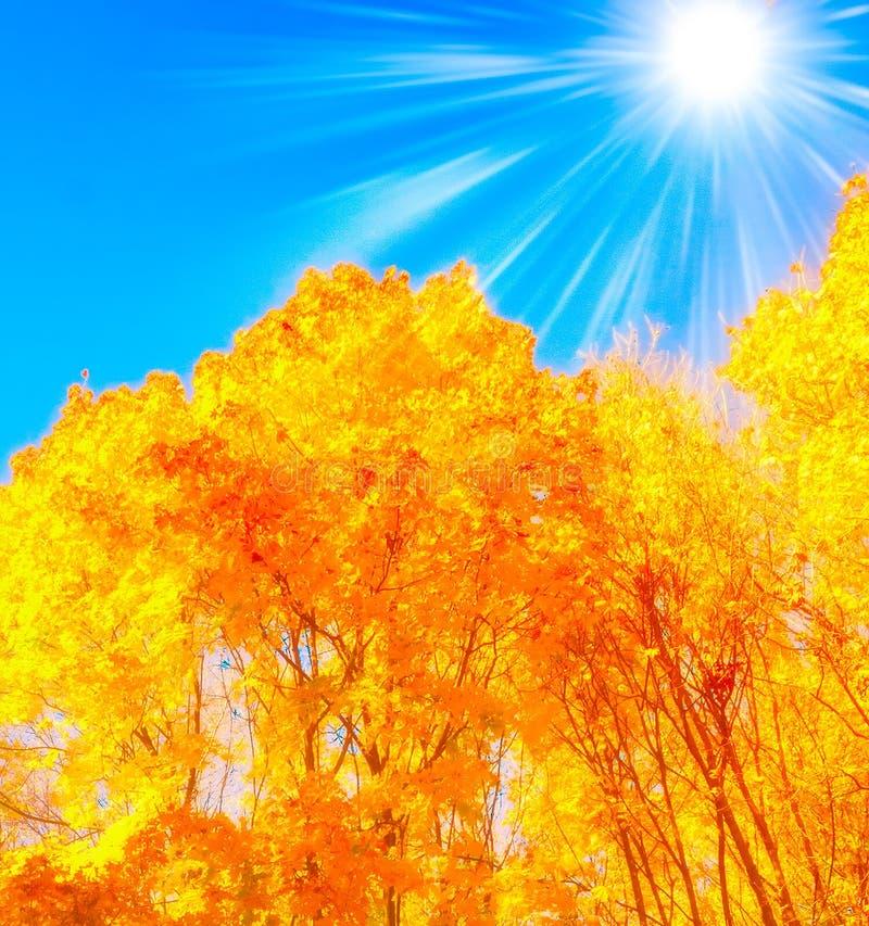 Herbstbuchenblätter lizenzfreies stockfoto