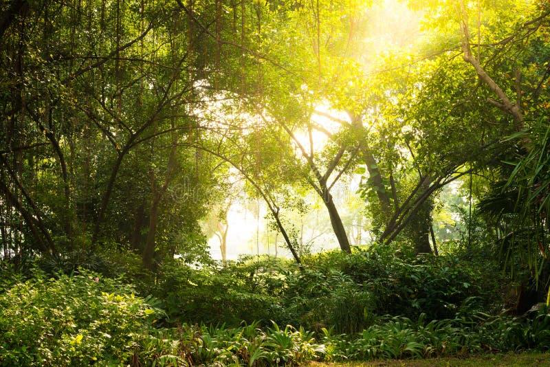 Herbstdämmerung im Wald lizenzfreie stockfotografie